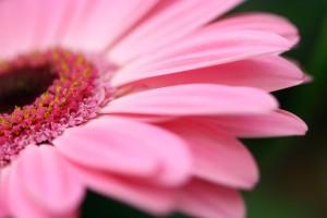 Homeopathy and Health rebates Homeopathy Healing