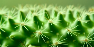 prickly-heat-natural-relief-homeopathy