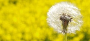 hayfever-and-allergies