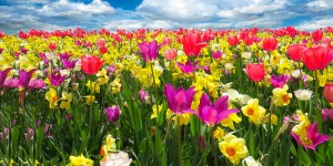 Spring Detox With Homeopathy Healing