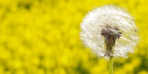 hayfever-and-allergies-natural-treatment