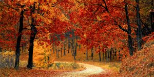 Boost your immune system this autumn with Homeopathy