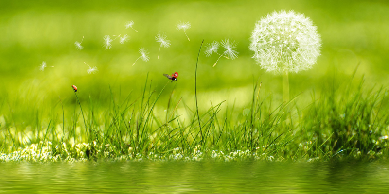 How to Enjoy the Summer Without Hayfever and Allergies Using Homeopathy