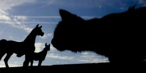 Cat & Horse Allergies Resolved Naturally With Homeopathy