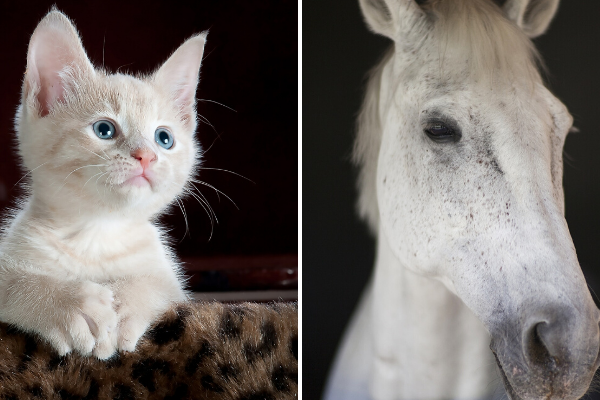 Cat and Horse Allergies Resolved Naturally With Homeopathy